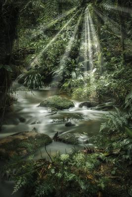 Floresta 145
