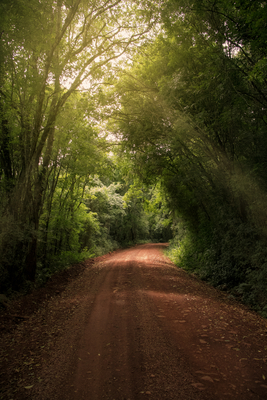 Estrada de terra que corta a floresta