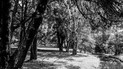 Campos do Jordão - Horto Florestal