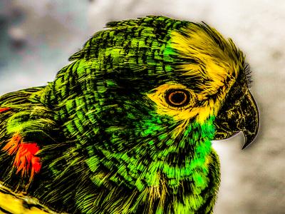 Tato - O Papagaio