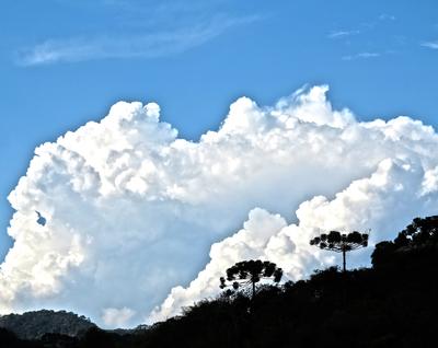 Araucária entre nuvens