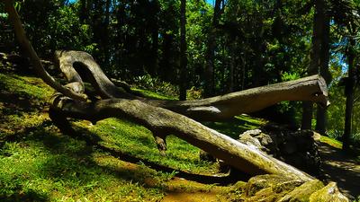 Floresta Tronco