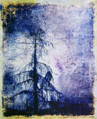 Árvore Azul 2