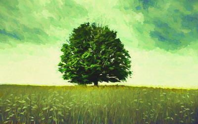 Árvore Solitária 2