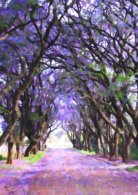 Caminho entre o Bosque 2