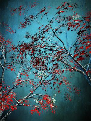 Árvores Vermelhas 2