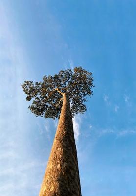 Árvore e um Céu Azul