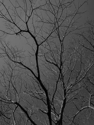 Árvore em Branco e Preto