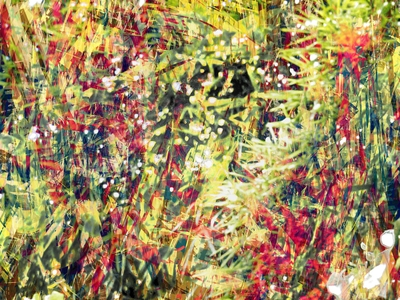 Natureza 25