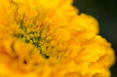 Flor Amarela 3