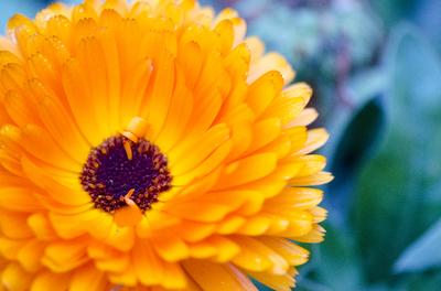 Flor Amarela 1