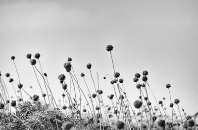 Flores PB