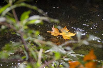 Folhas do Outono 2