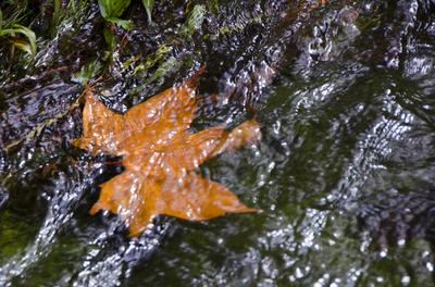 Folhas do Outono 1