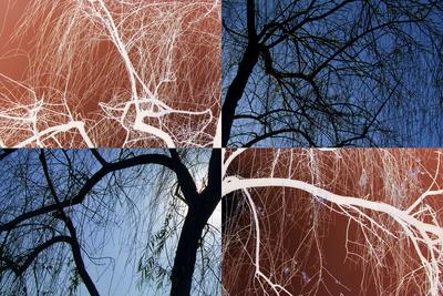Árvore - Parque do Ibirapuera
