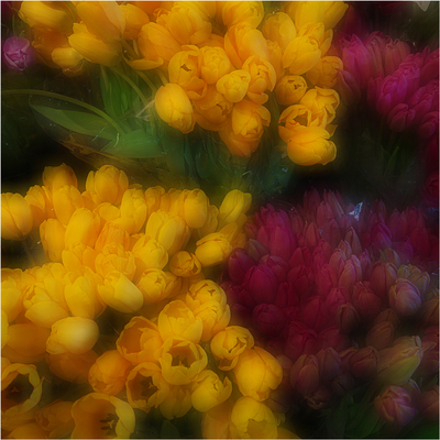 Série NY - Flores
