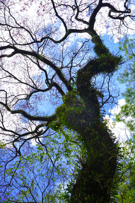 Árvore e Galhos