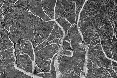 Aérvores do Central Park II