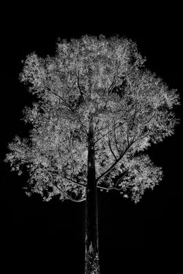 Árvore Negativa 1