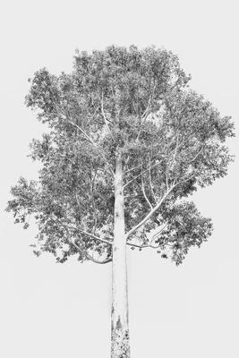 Árvore Negativa 2