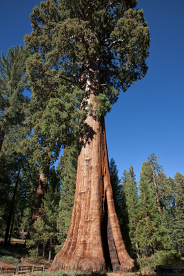 Sequoias National Park 2
