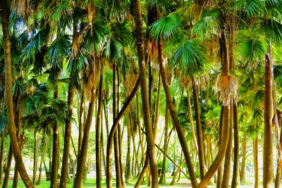 Paisagem de palmeiras