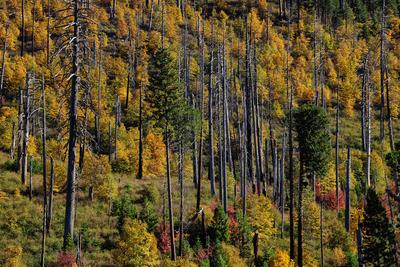 Paisagens de outono