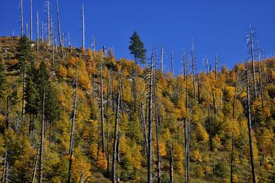 Paisagens de outono no EUA