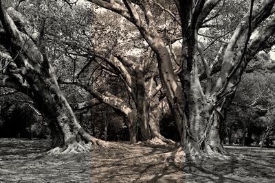 Árvore urbana II