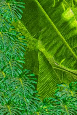Bananas & Costela-de-Adão