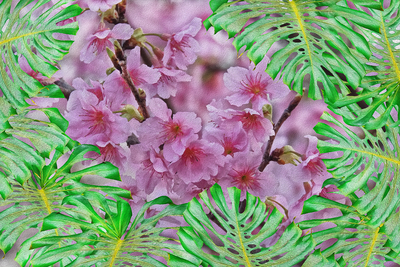 Flor de cerejeira e Costela-de-adão