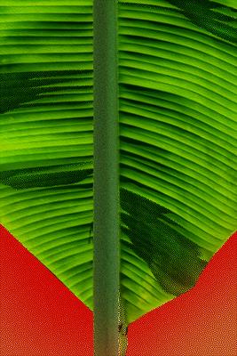 Folha de Bananeira - Arte digital