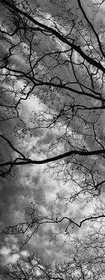 Árvore Central Park - New York