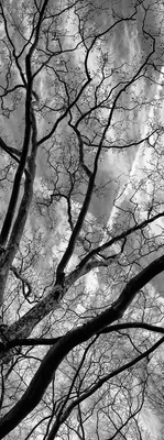 Árvore Central Park - New York III