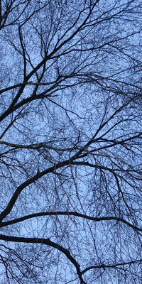 Árvore Central Park - New York VIII