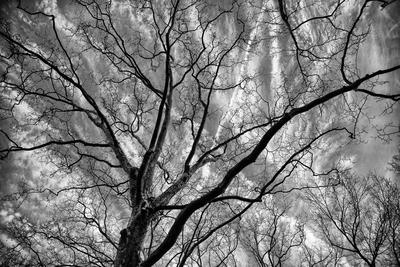 Árvore Central Park PB - New York
