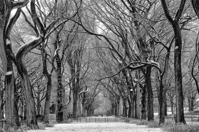 árvores do Central Park