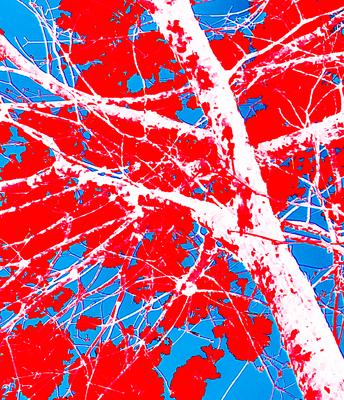 Tree Red I
