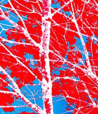 Tree Red II