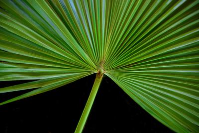 Folha de palmeira moinho de vento