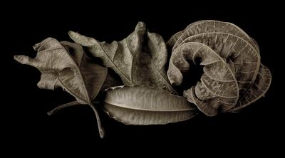 Natureza morta com folhagens