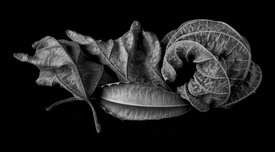 Natureza morta com folhagens II