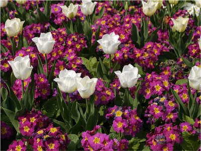 Série Cores - Flores