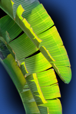 Folha de Bananeira - Arte digital II