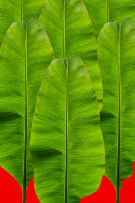 Folha de Bananeira - Arte digital III
