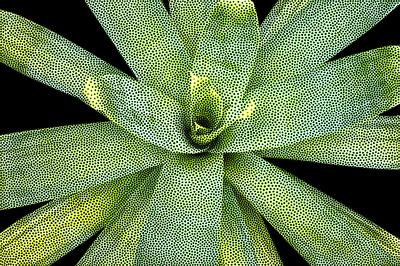 Bromélia V