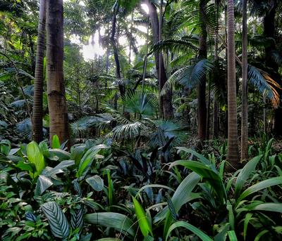 Floresta 1 - São Paulo