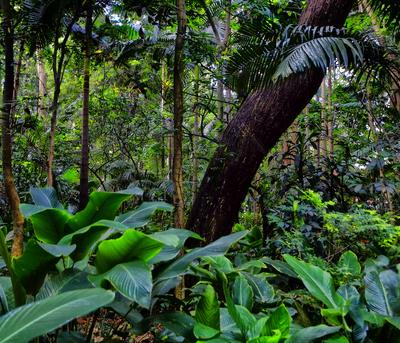 Floresta 2 - São Paulo
