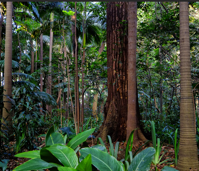 Floresta 3- São Paulo