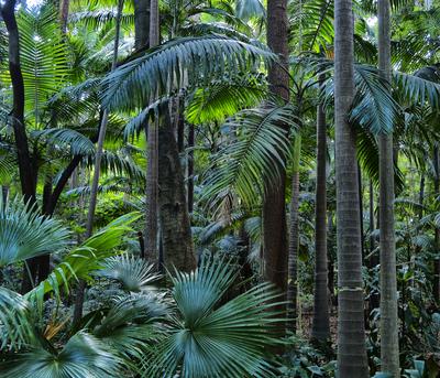 Floresta 4 - São Paulo